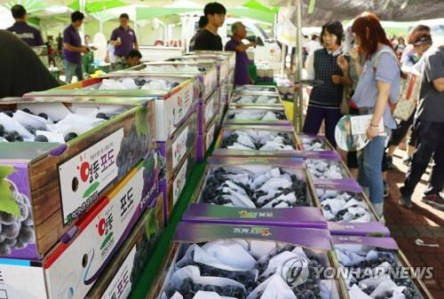 영동포도축제 내달 중순 개막…온라인 판매 시동
