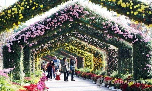 대전 유성에 40여종의 국화 활짝…12일부터 전시회