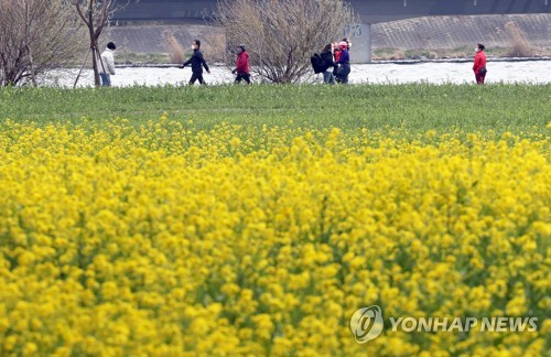 봄은 어디에 낙동강 벚꽃축제 등 주요 축제 올해는 건너뛴다