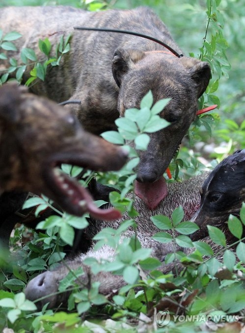 Gov't to expand project keeping wild boars from threatening residents