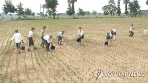North Korean soldiers are pouring water onto dried-up rice paddies amid a severe drought in this photo captured from the North's Korean Central TV on June 26, 2017. (For Use Only in the Republic of Korea. No Redistribution) (Yonhap)