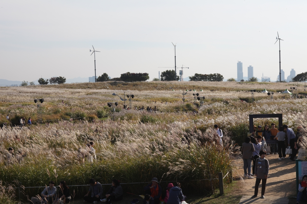 This photo, provided by the Seoul Metropolitan Government, shows a view of the silver grass fields from last year's event. (PHOTO NOT FOR SALE)(YONHAP)
