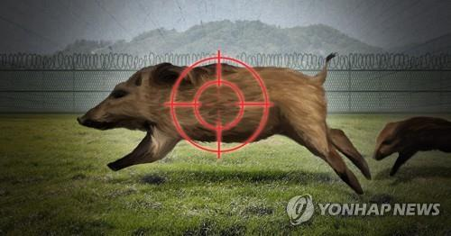 S. Korea confirms 34th wild boar infected with African swine fever
