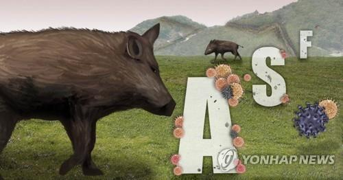 S. Korea reports more wild boars infected with African swine fever - 1