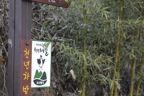 가파른 야생 녹차밭길에 조성된 천년차밭길 [사진/성연재 기자]