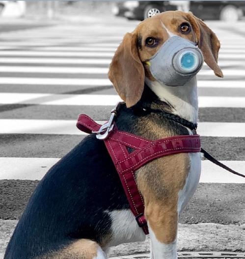 강아지용 미세먼지 마스크