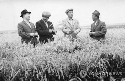 행정자치부 국가기록원은 2017년 고려인 강제이주 80년을 맞아 카자흐스탄과 우즈베키스탄 국립영상보존소가 소장한 기록물을 공개했다. 1969년 고려인이 벼농사 작황을 살펴보고 있다. [국가기록원 제공]