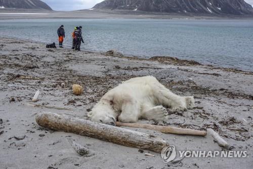 지난해 7월 노르웨이의 한 해안에 죽어 있는 북극곰[EPA=연합뉴스 자료사진]