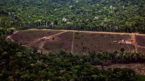 불법벌목으로 사라진 아마존 열대우림 [브라질 뉴스포털 G1]