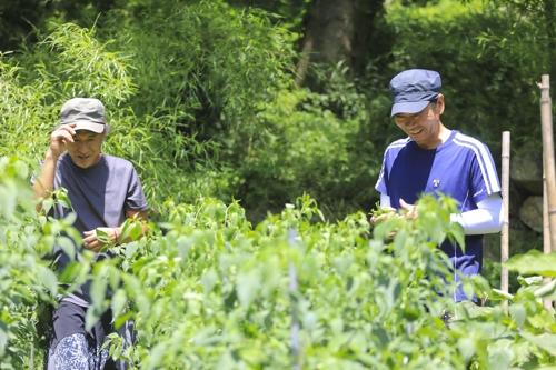 쉼터 도움으로 남원에 정착한 김달영 씨(오른쪽)가 장병관 집행위원장과 함께 텃밭에서 고추를 따고 있다. [사진/성연재 기자]