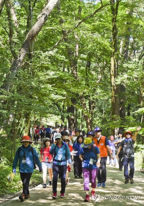 치악산 황장목 숲길 걷기