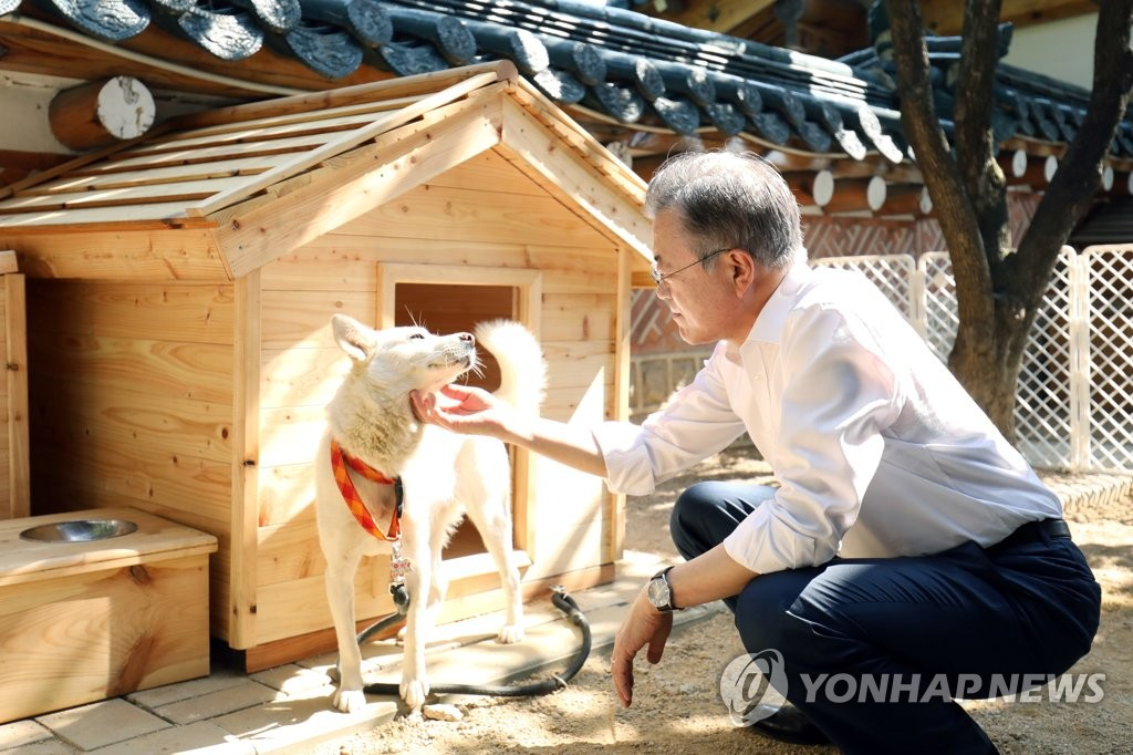 President Moon Jae-in pats Gomi, one of the two dogs gifted to him by North Korean leader Kim Jong-un in this photo provided by Cheong Wa Dae. (Yonhap)