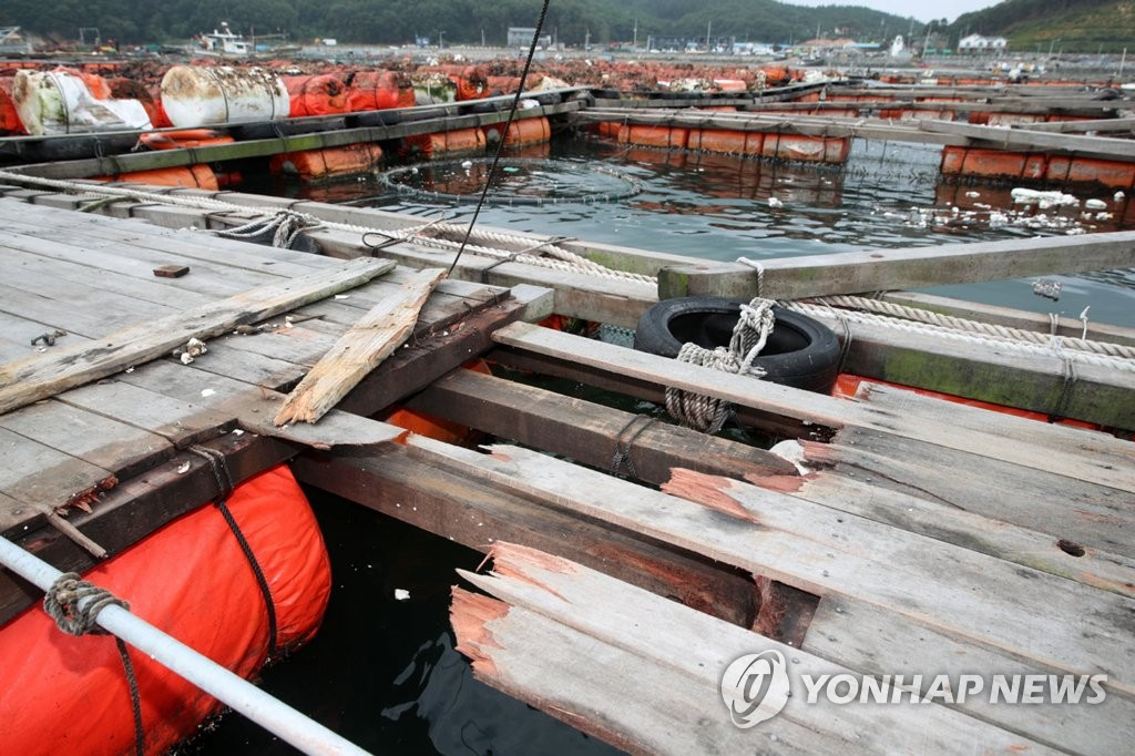 This photo shows a damaged fish farm, located in Taean, about 150 kilometers southwest of Seoul, on Sept. 8, 2019, due to Typhoon Lingling, which struck the country the previous day. (Yonhap)