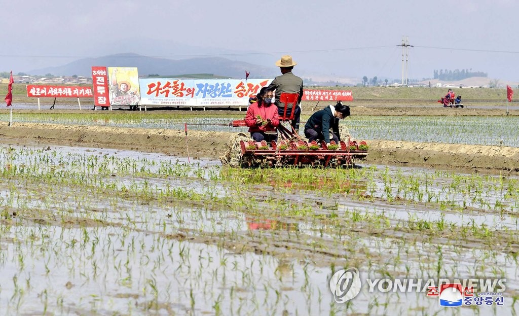Rice planting in N. Korea