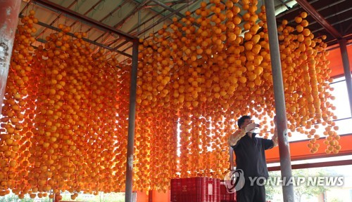 Season for making dried persimmons